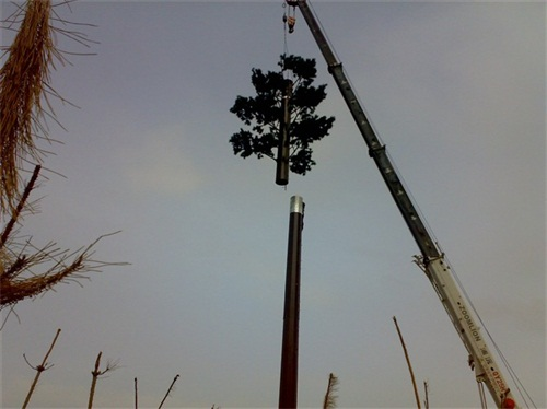 6米仿生树通信塔